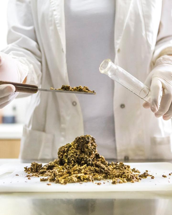 cannabis-contenu